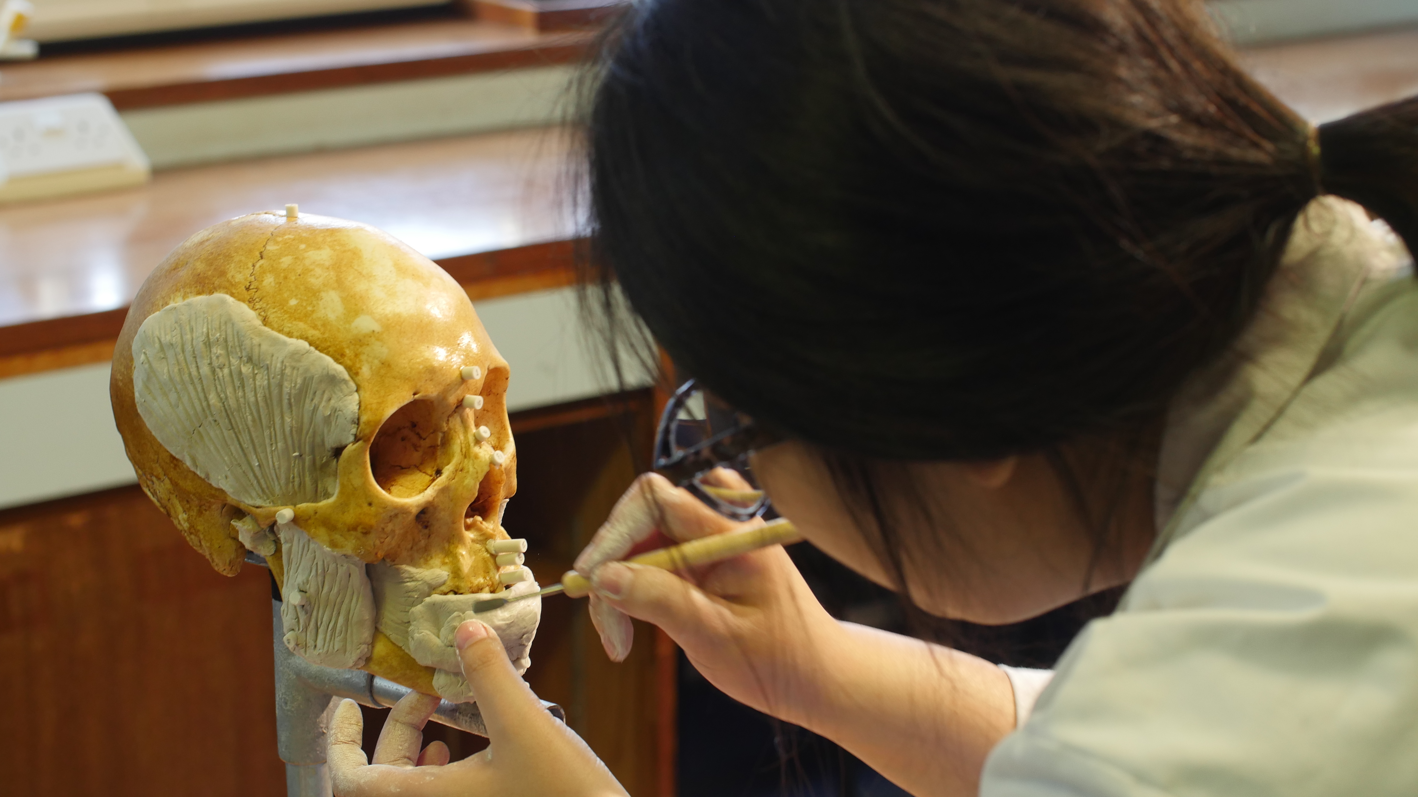 Our demonstrator conducting a facial reconstruction in clay