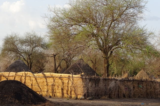 Acacia and Balanites trees in Gedarif state, Eastern Sudan. The trees are in front of mud huts.