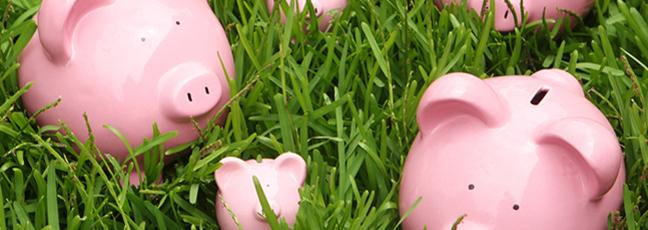 Pink piggy banks on grass