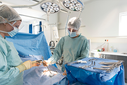Two surgery students in an operating theatre