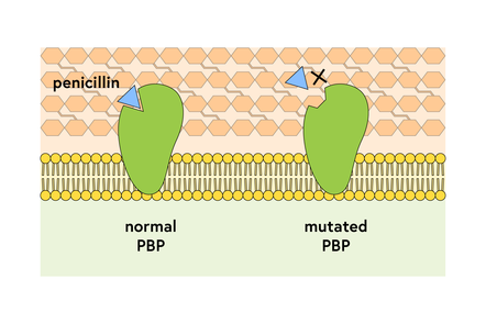 Darwing illustratiion of a mechanisam of antibiotic resistance