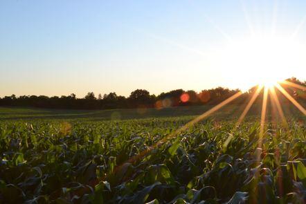 Sun shining over a field