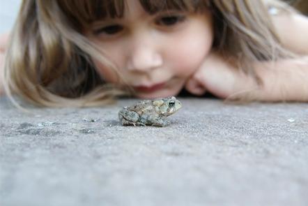 Child examining frog.