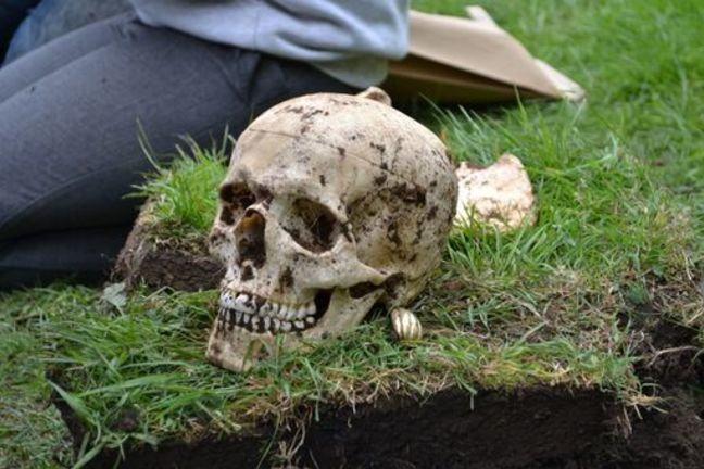 An image of a replica skull which has been excavated from a training excavation. The skull is resting on grass and has dirt adhering to it.