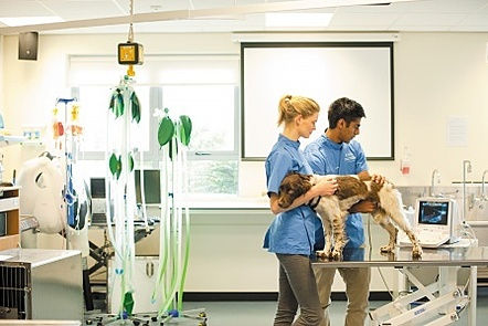 Students scanning a dog