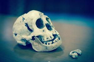 'The Hobbit' skull