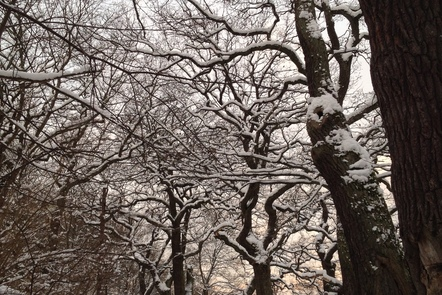 Snow-covered trees in Stockholm