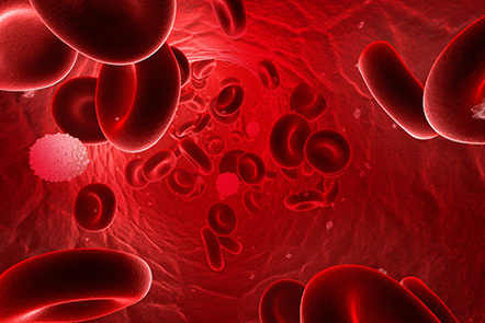 Red and white blood cells flowing through a vein.
