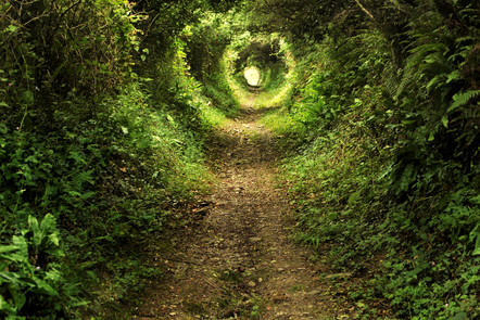 A path runs through a forest with greenery growing around the path on the left and right, almost forming a tunnel